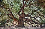 Angel Oak Tree - Color